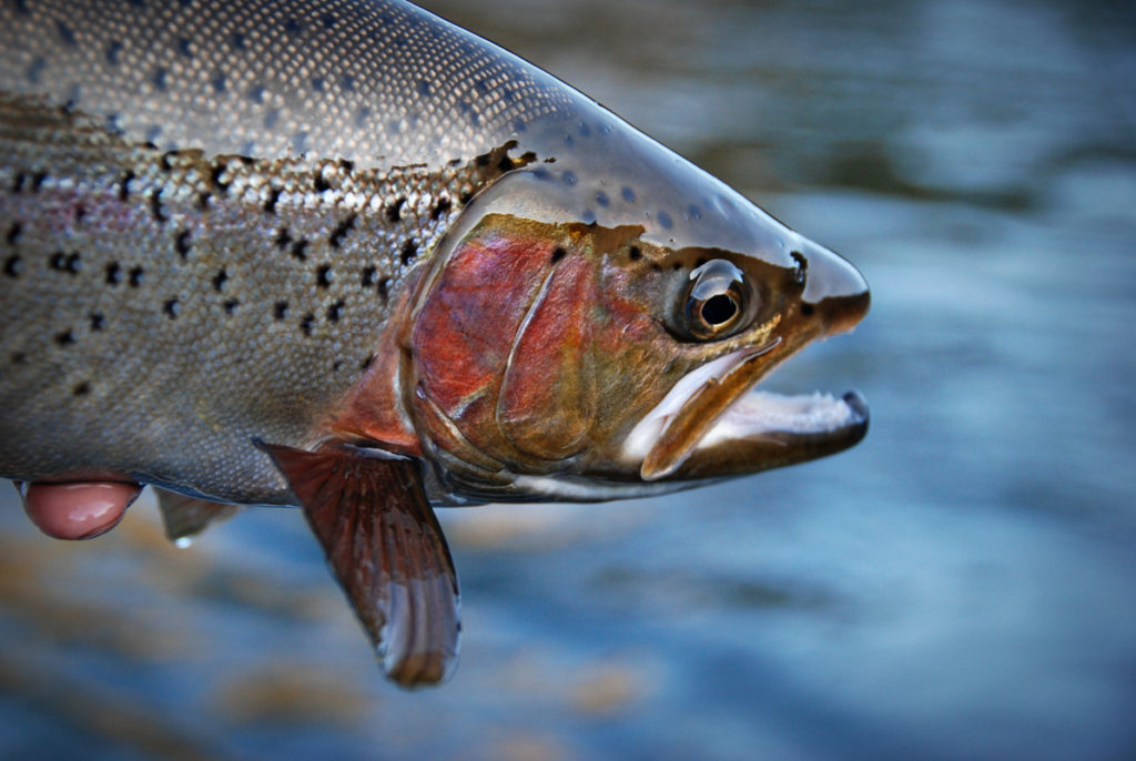 big-sky-montana-real-estate-trout