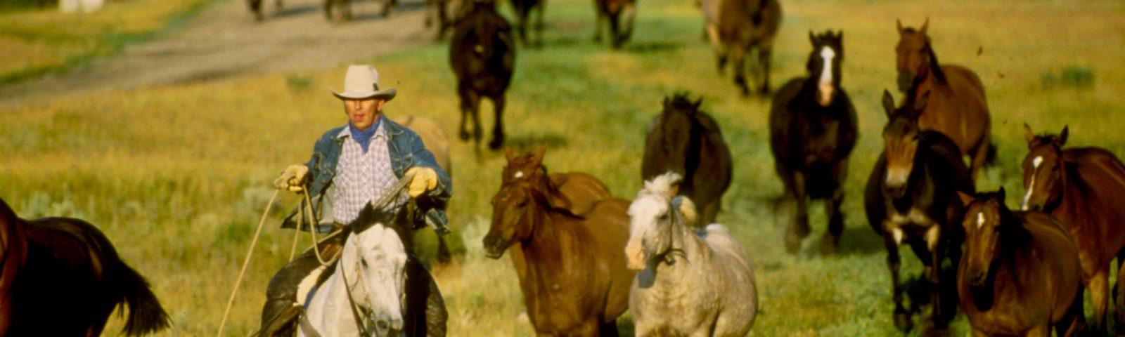 320Ranch Cowboy